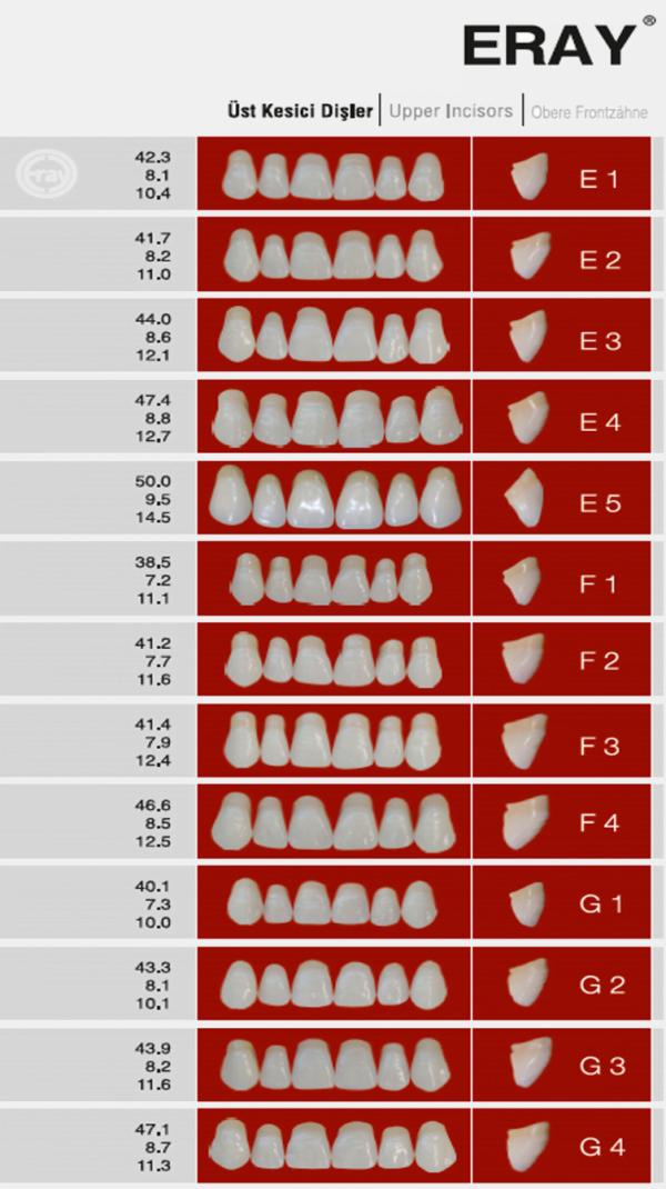 Eray Anterior Teeth